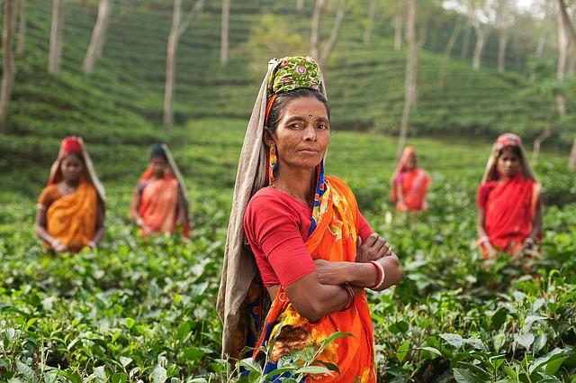 indická žena na poli
