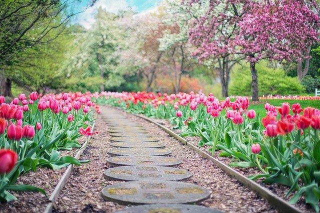 Chodník v zahradě s tulipány
